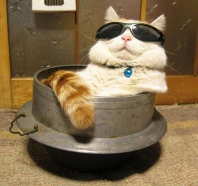 ianimal.ru Фитнес-кот