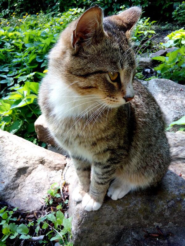Кот на камне.jpg