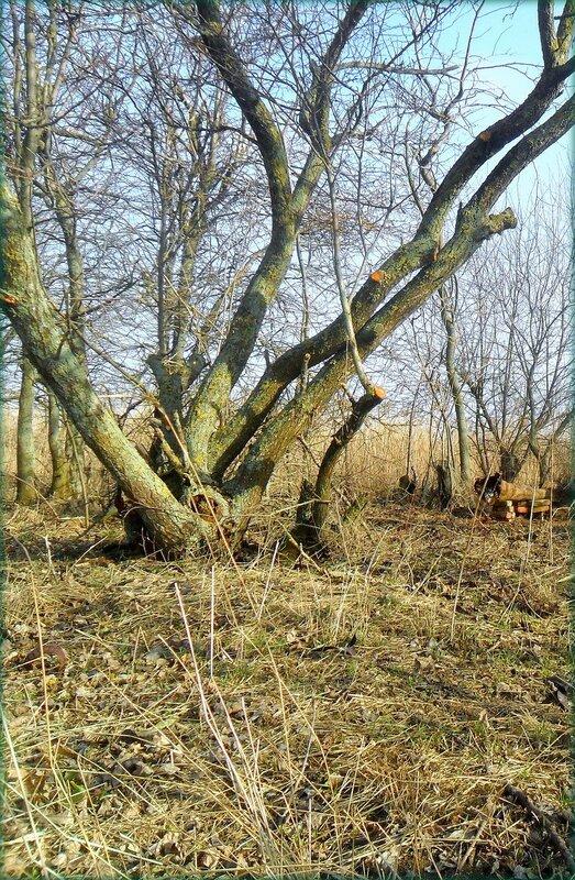 У зимней сущности дерева...