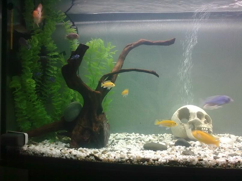 Доступно об аквариуме