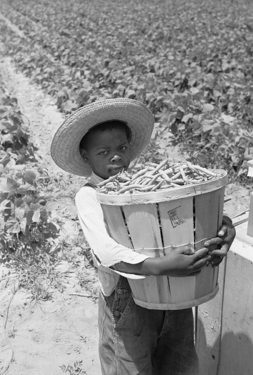 Юный сборщик бобов, Кембридж, Мэриленд, 1937