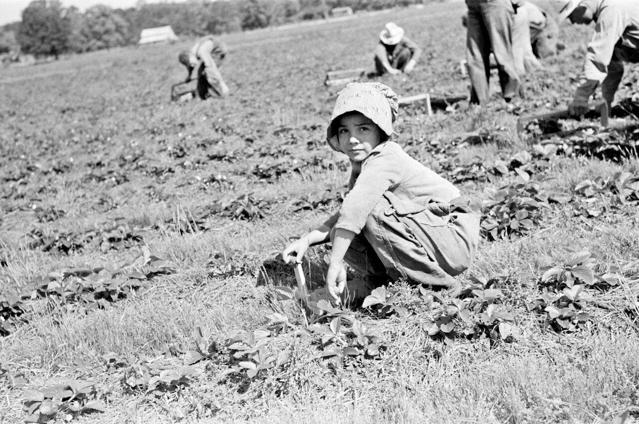 Ребенок сезонных сборщиков земляники около Хаммонда, Луизиана, 1939