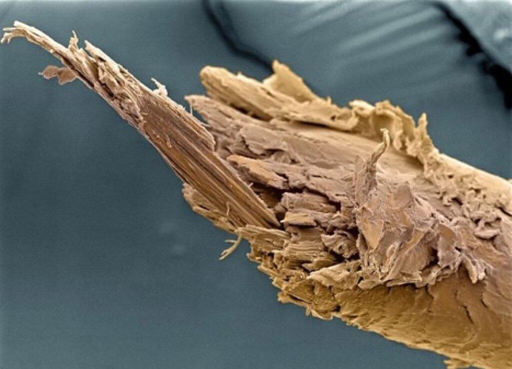 Сломан кончик человеческого волоса