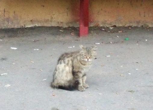 Марфинский кот из прошлого. Сидит посреди людского срача...