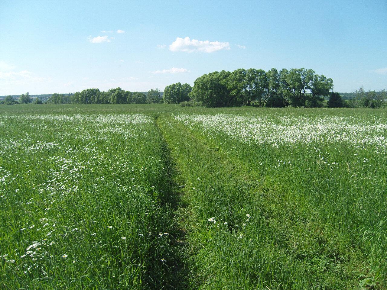 цветущий луг и пушистые ивы