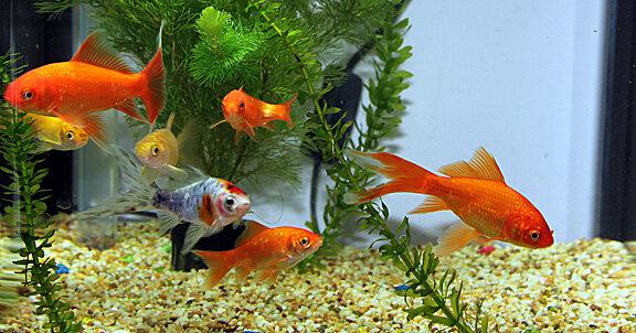 Рыбки из аквариума