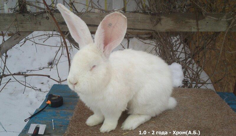 Бельгийский Великан(Обр,Ризен,Фландр) Кролики гиганты.часть 2 - Страница 5 0_d5152_2987ced8_XL