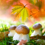 Autumn_nature