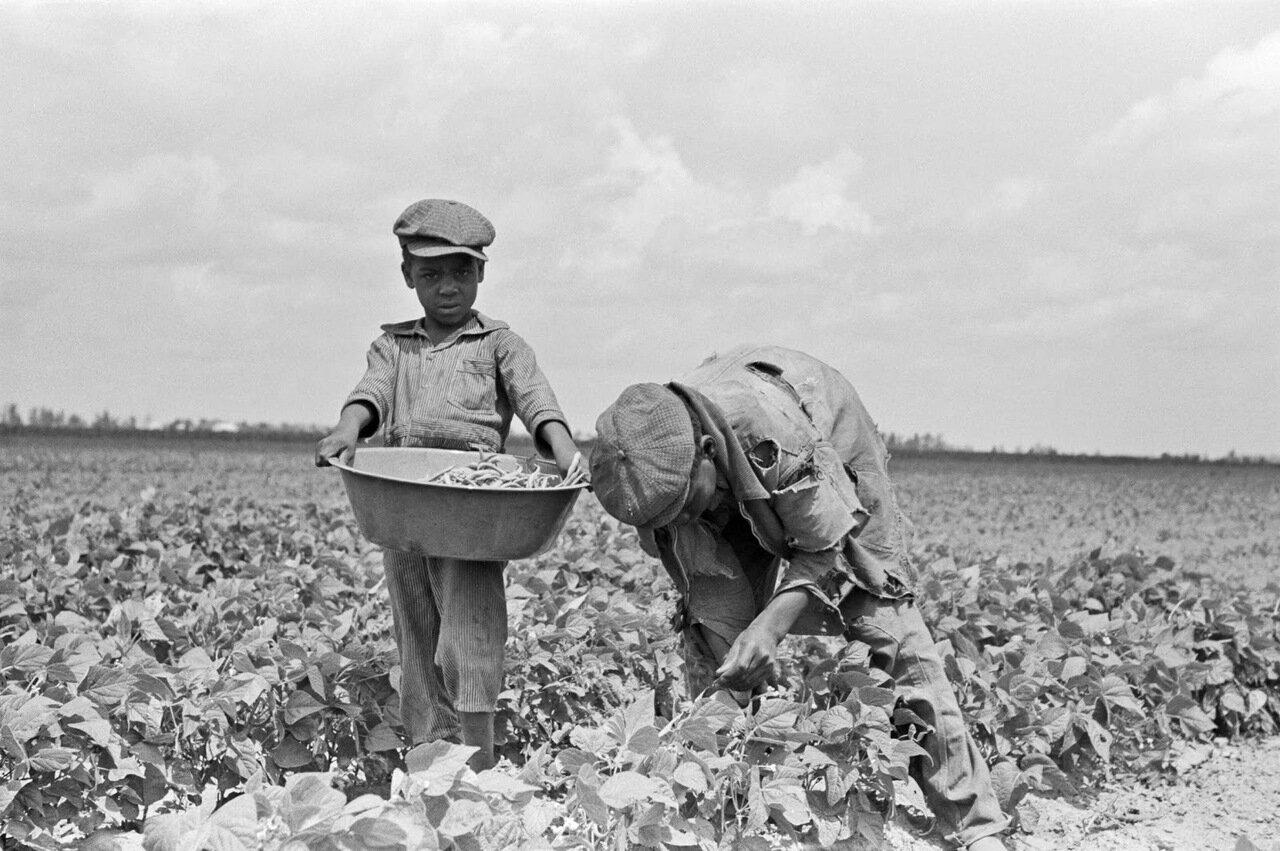 Ферма в юго-восточной части Миссури. Дети испольщика, собирающие стручковую фасоль, 1938