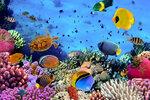Underwater (5).jpg