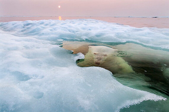 Победители National Geographic PC 2013 (13 фото)