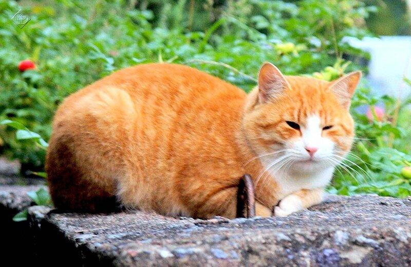 Кот мечтающий