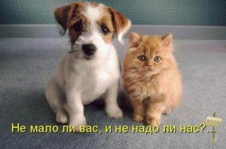 О животных с юмором