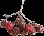 xstrawberries_christmasJoy_free ) (3).png