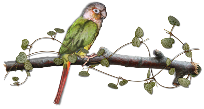 mzimm_call_of_the_jungle_bird_on_branch_shadow.png
