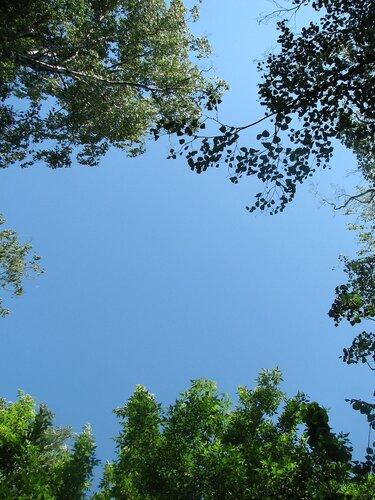 Рамка из листьев для неба