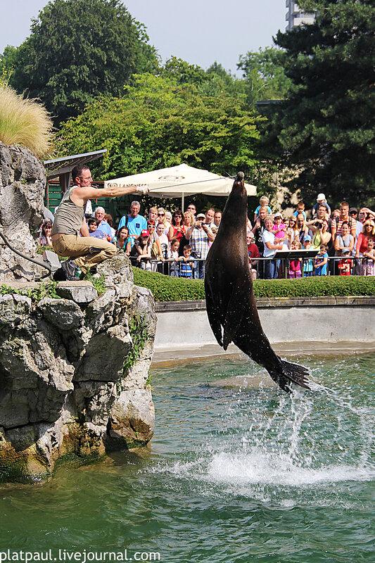 кельнский зоопарк