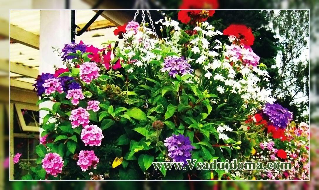 оформление подвесной корзины с цветами