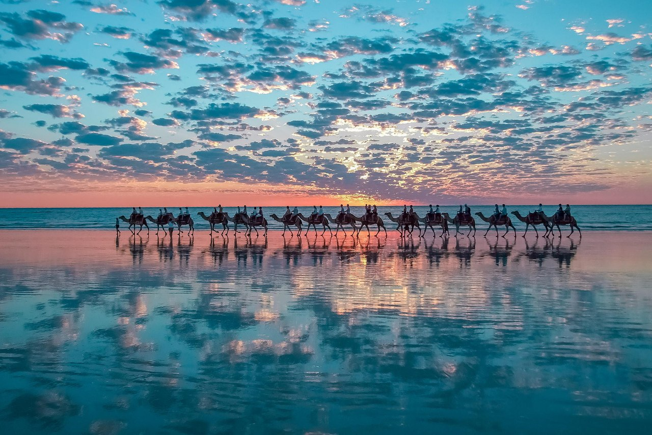 Camels on the coast of Australia