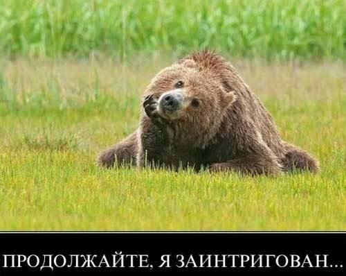 Из жизни животных