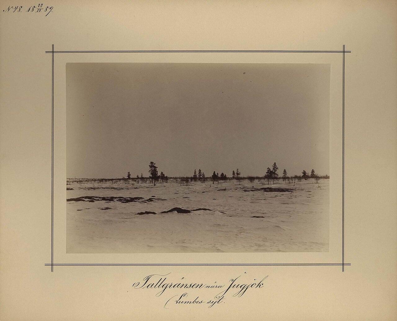 22.4.1889. Сосны возле Ломбовска
