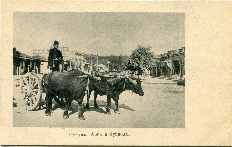 Арба и буйволы