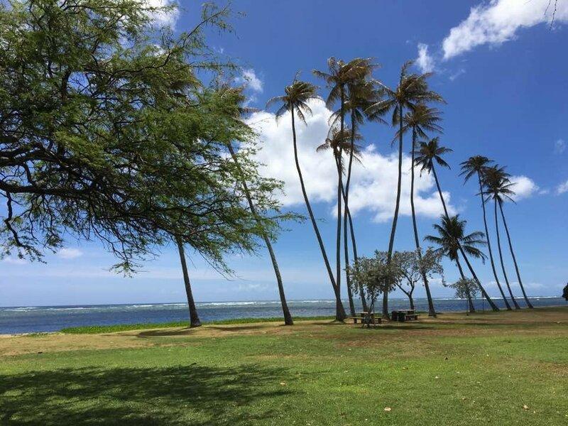 Восточный берег гавайского острова Оаху. здесь, острова, места, Куалоа, местных, пляже, динозавров, живых, долинах, горах, встретить, надежде, задерживаются, немного, Пофотографируют, видел, бывают, Туристы, туристического, отдохнуть