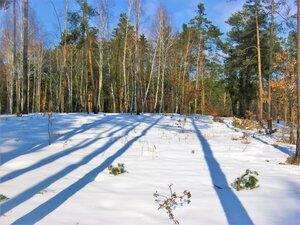 Лесные тени.