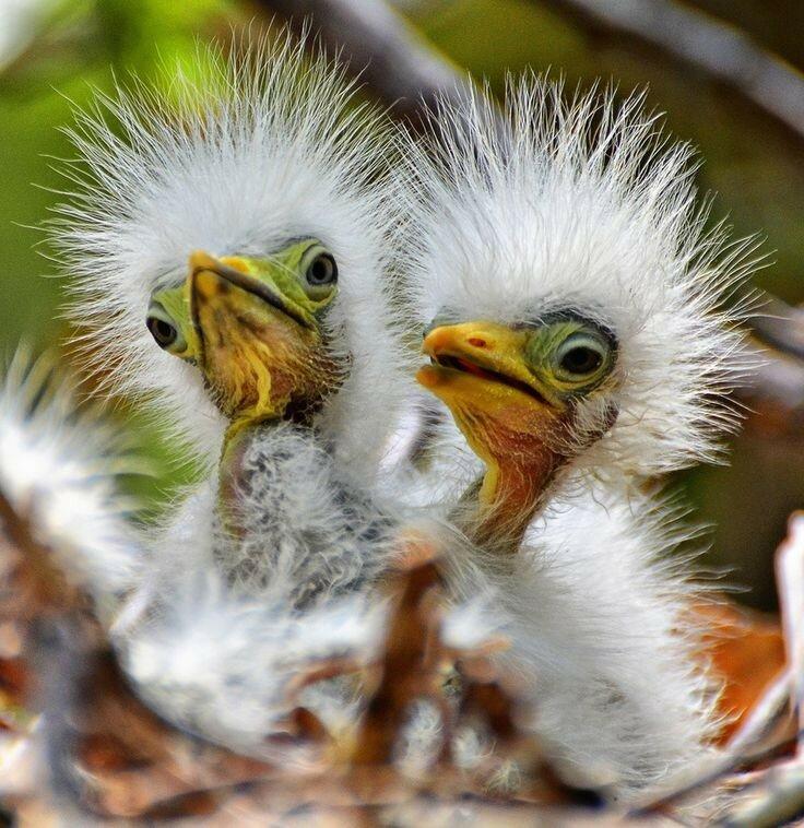 Смешные фото птицы, открытки днем рождения