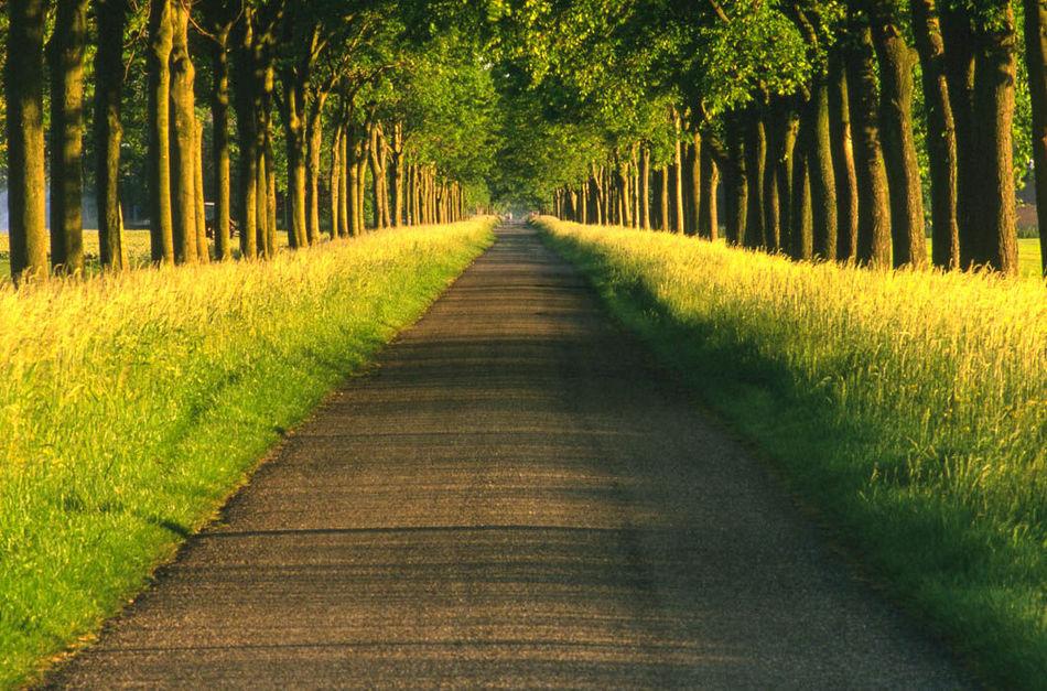 12 самых живописных аллей планеты
