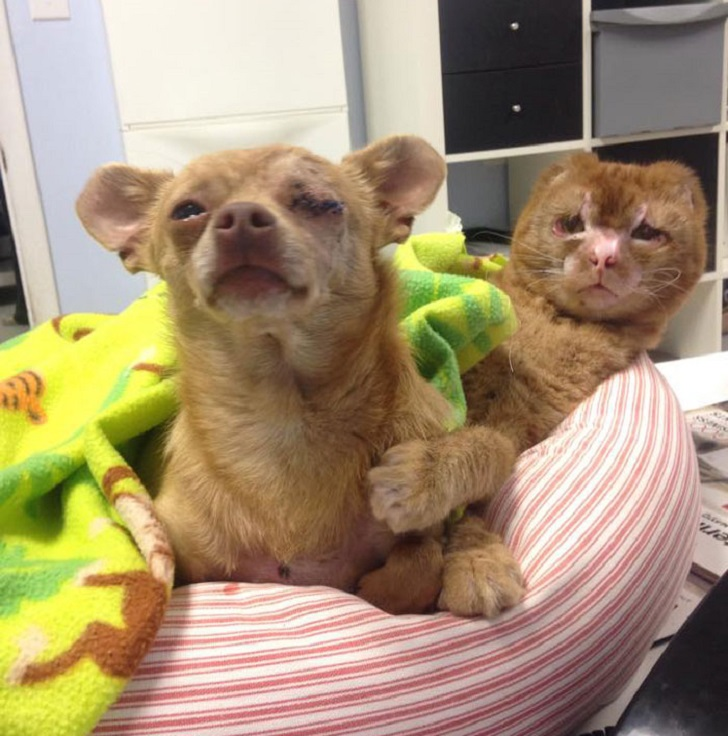 Целебный кот Расселл, выживший в пожаре: идет направо — песнь заводит