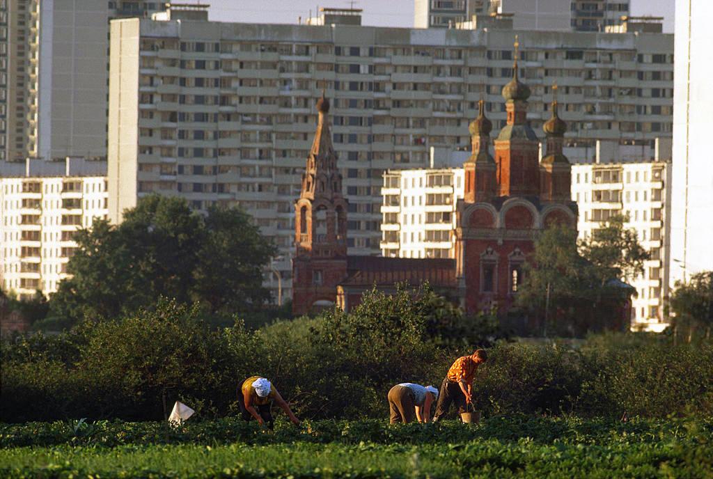 Последние огородники Тропарёва, Москва, 1978 год