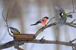 Птицы у кормушки.jpg