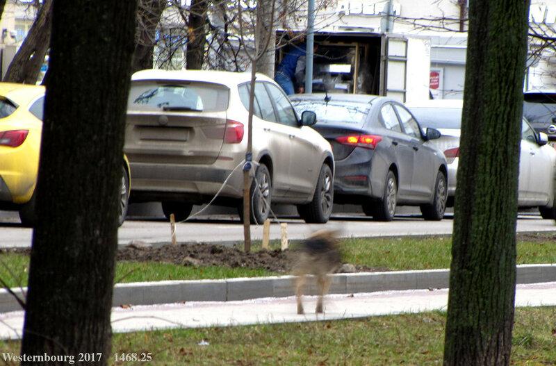 1468.25 Призрак собаки в шарфе