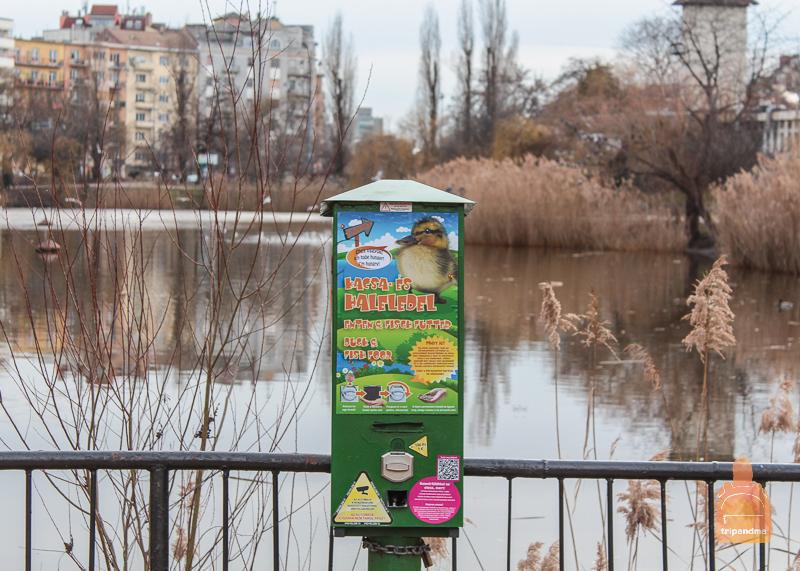 Поверхность озера облюбовали водоплавающие птицы