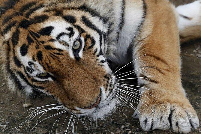 0 178908 af6dab9f XL - Лучшие фотографии животных осени 2017
