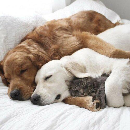 дружба кота и собак фото