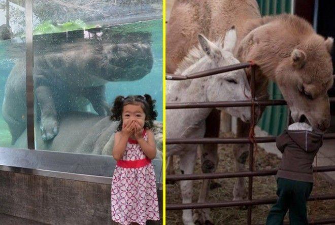 А теперь представьте, как вы всей семьей с отличным настроением входите в зоопарк, и ваши ожидания с