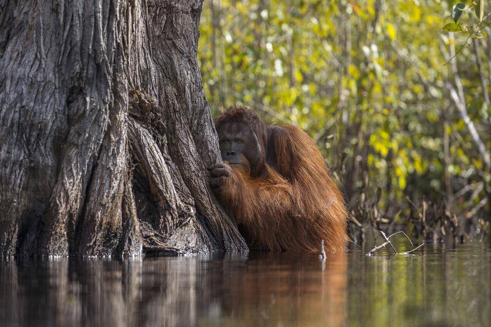 11. Comedy Wildlife Photography Awards — самый веселый фотоконкурс года, имеющий серьезную составляю