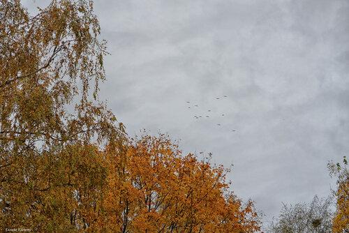 Осень. Птицы.