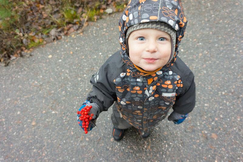 ребенок ест рябину осенью