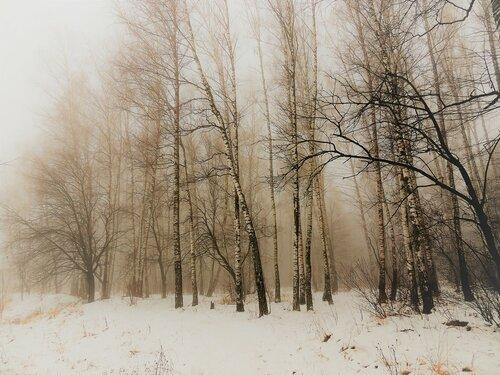 В зимнем тумане...