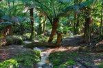 Тасманийский лес