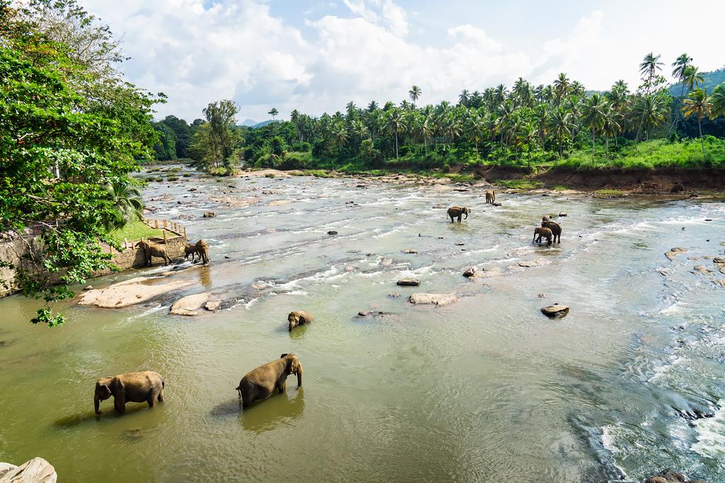 Шри-Ланка: приют для слонов Пиннавела