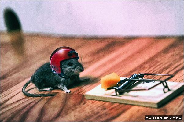 Мыши как домашние вредители. Как обнаружить и избавиться?