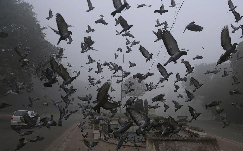 8. Главной причиной скачка концентрации вредных частиц в Дели стал дым от пожаров в сельских угодьях