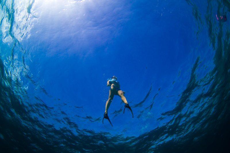 Просто вау: австралийка без опаски плавает с акулами (17 фото)