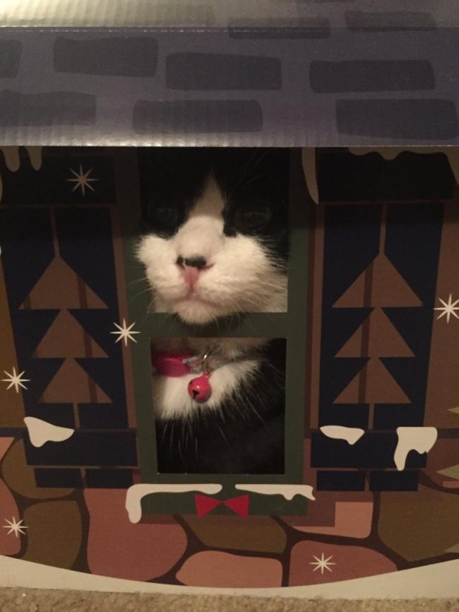 © Oreo the Cat / twitter      «Просто несмотри нашарик, просто несмотри нашари