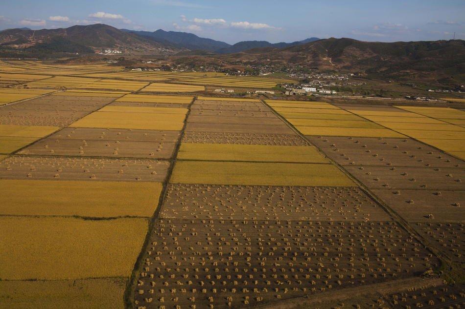 Портреты Ким Ир Сена встречаются прямо в полях, 6 октября 2011: