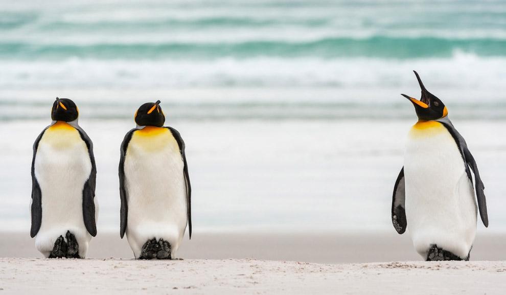 13. Караоке-бар. (Фото Daniel Trim | The Comedy Wildlife Photography Awards):